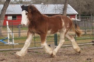 Horse Feathers Orin Ri